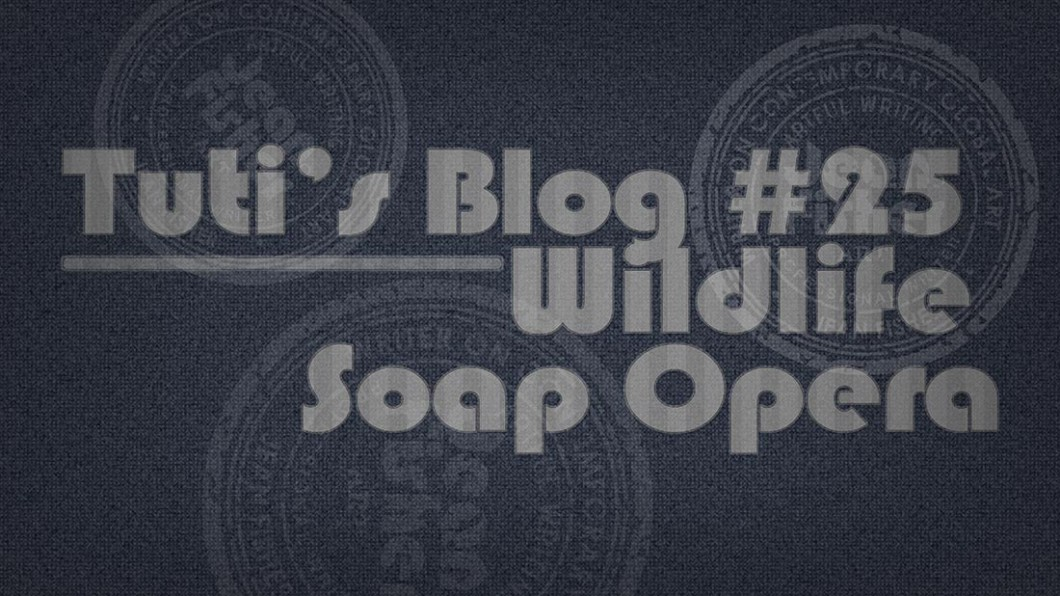 Wildlife soap opera text on a fabric background