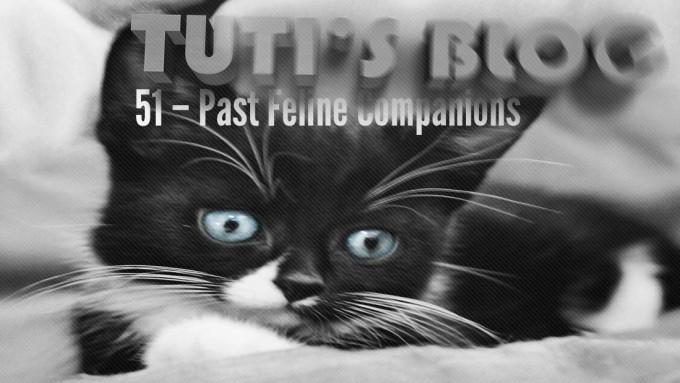 Past Feline Companions, tuti fruti as a kitten